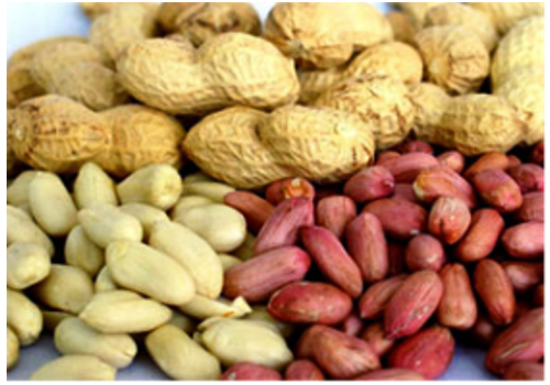 Introduction of Chinese Peanuts Industry