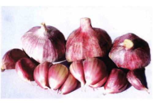 Introduction of Chinese Garlic Industry