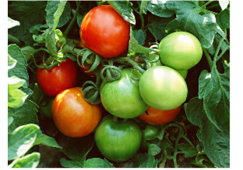 Tomato Sauce Industry in China