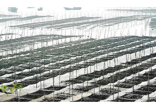 Introduction of Chinese Fish Farming Industry