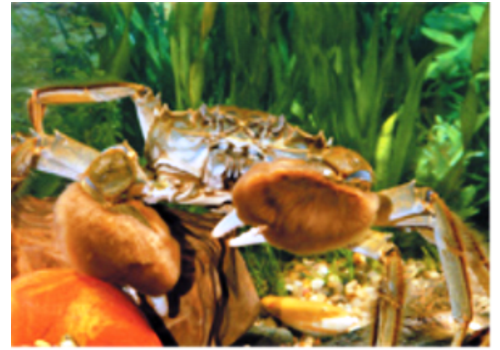 Yangcheng Lake Crab Breeding Base--Jiangsu